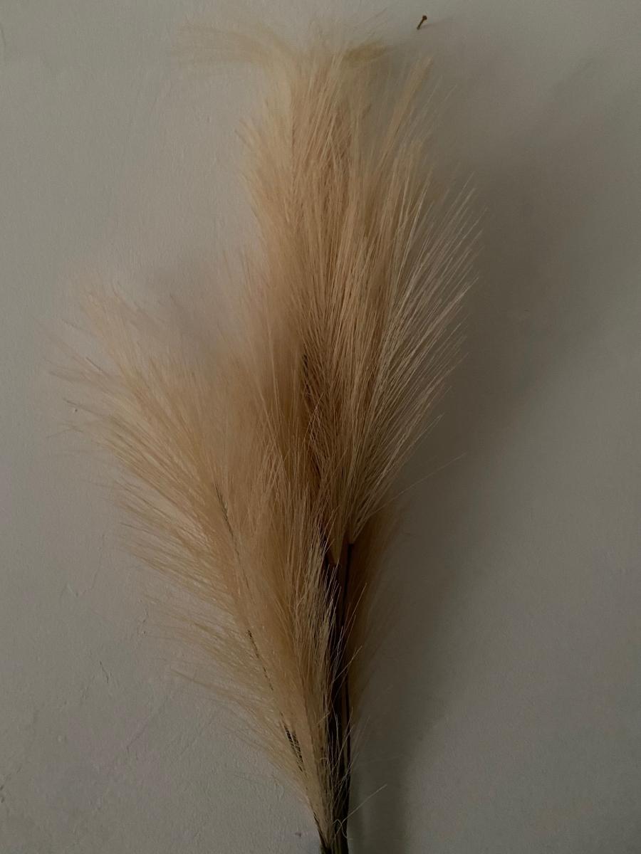 Branche de fausse pampa - Côté Table - Longueur de la tige 93cm
