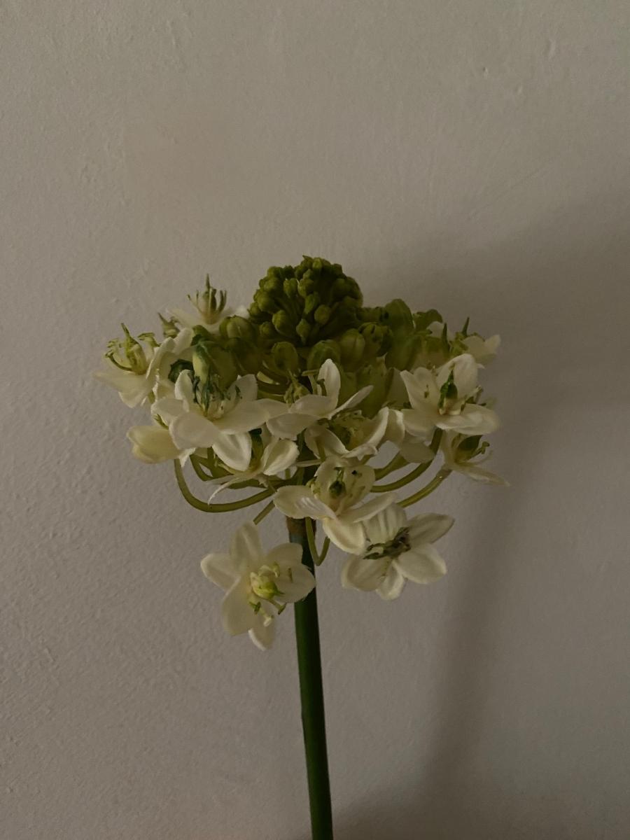 Branche de fausses fleurs d'ail - Côté Table - Longueur de la tige 79cm